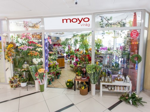 Moyo-Virág